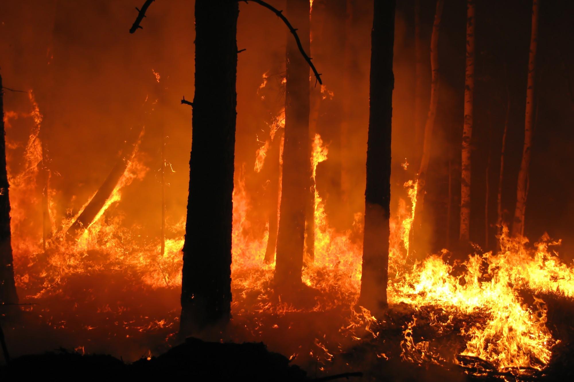incendi boschivi Sicilia