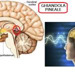 Ghiandola Pineale: la pigna del benessere