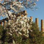 Agrigento e il suo mandorlo in fiore