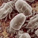 Quando germi e batteri invadono la nostra vita?
