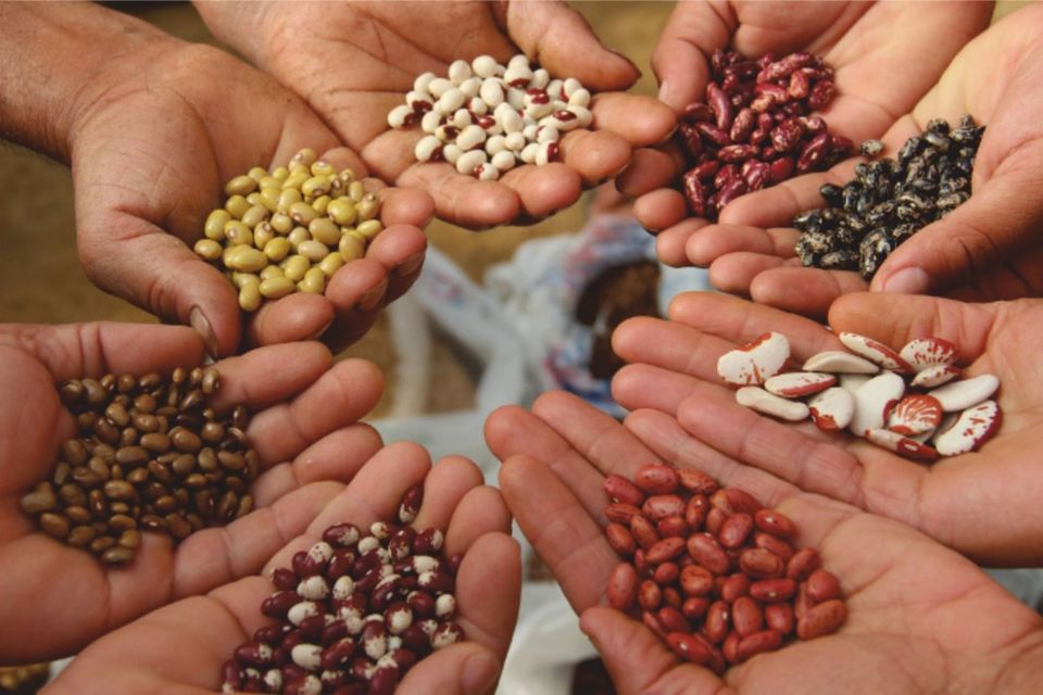 biodiversita-agraria-e-alimentare