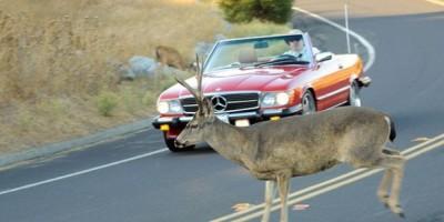 incidenti animali